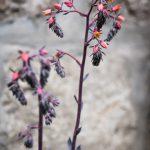 Blume im Kloster
