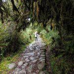 Weg durch den Wolkenwald