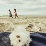 Carlos, das Strandschwein
