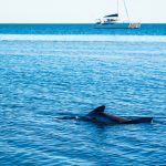 Oller Delfin