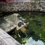 Schildkröten in der Jade Pagode in HCM