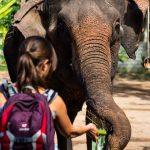 Zuckerrohr für unseren Elefanten Hoot