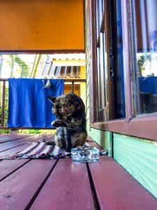 Unser Haustier Susi nach dem Frühstück