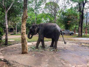 Unser Haustier beim Mittagessen... Ne Spaß... Nur nen Elefant am Wegesrand