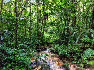 Bächlein im Dschungel