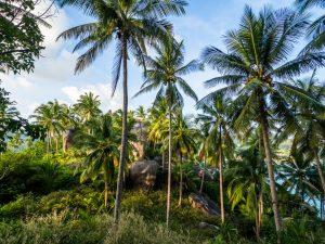 Dschungel auf Koh Tao