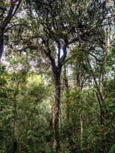 Verwunschener Baum im Urwald