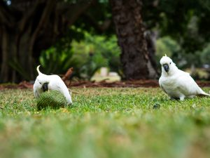 Weiße Papageie