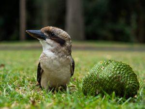Lustiger Vogel am Naschen