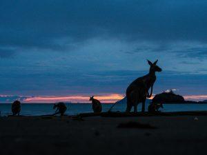 Kurz vor 6 am Strand von Cape Hillsborough