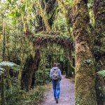 Wandern im uralten Wald am Milford