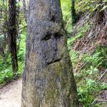 Ein Gesicht im Abel Tasman Nationalpark