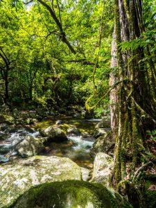 Bachlauf im Dschungel