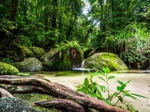 Unsere kleine Oase im Dschungel