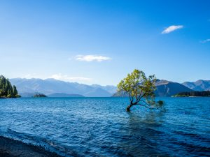 Baum im Wanaka See
