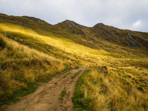 Wandern durch goldene Wiesen