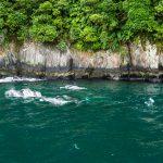 Delfine im Milford Sound