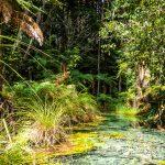 Glasklarer See bei den Redwoods