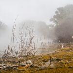 Es blubbert im Stadtpark Rotoruas