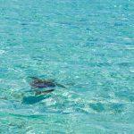 Auch die Schildkröten wissen die Lagune zu schätzen