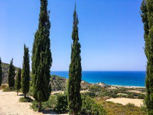 Zypressen, die Palmen des Mittelmeeres