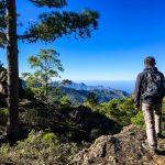 Wandern im Kiefernwald