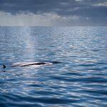 Ein Brydewal