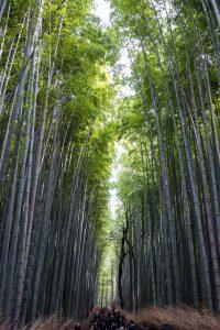 Massenandrang im Bamboo Forest