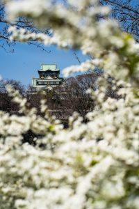 Osaka Castle hinter Kirschblüten